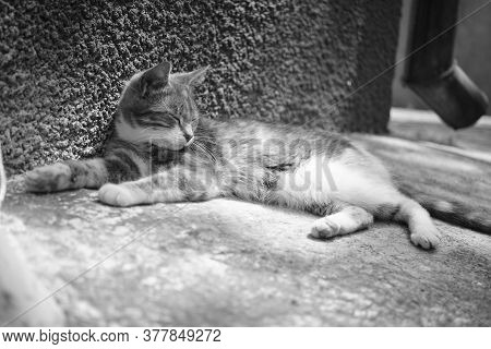Lovely Kitty Resting Near House Wall Outdoors. Bw Photo