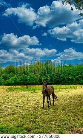 A Horse Grazing On A Lush Green Field. High Quality Photo