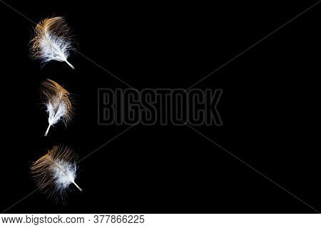 Yellow Feathers With Black Background. Abstract Soft Feathers Floating In Air Isolated On Black Back
