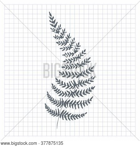 Sketch Fern. Single Hand-drawn Fern Branch, On Checkered Background. Vector Illustration.
