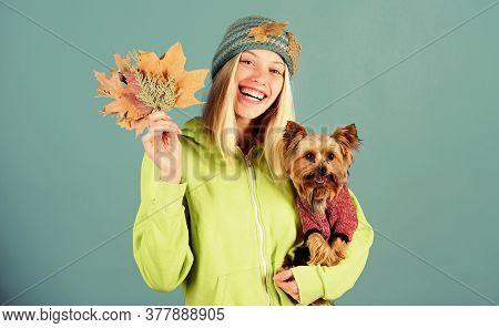 Veterinary Medicine Concept. Health Care For Dog Pet. Pet Health Tips For Autumn. Regular Flea Treat