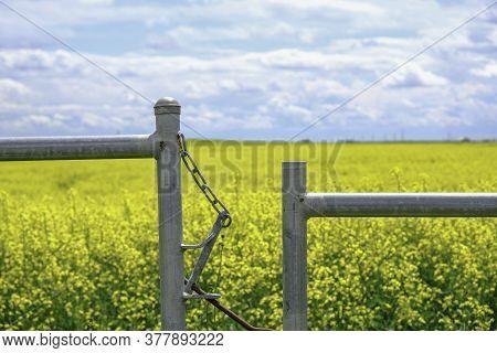 Farm Gate With Canola Farm Field Behind It