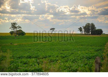 Farm Area In Brazil And Cumulunimbus Clouds In The Sky