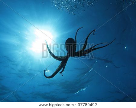 Octopus and sun