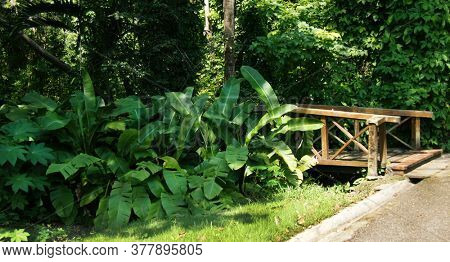 Tropical Green leaves. Summer. Green leaf. Banana leaves