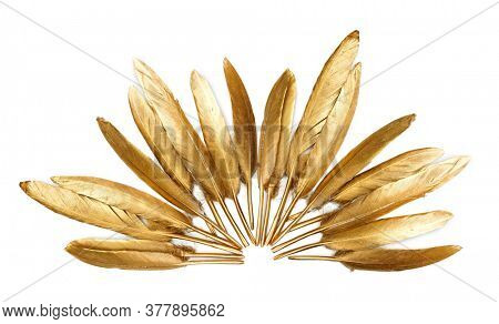 Golden feather on a white background