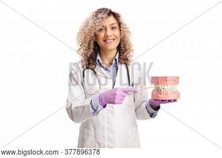 Female dentist holding a model jaw and pointing to teeth with a stick isolated on white background