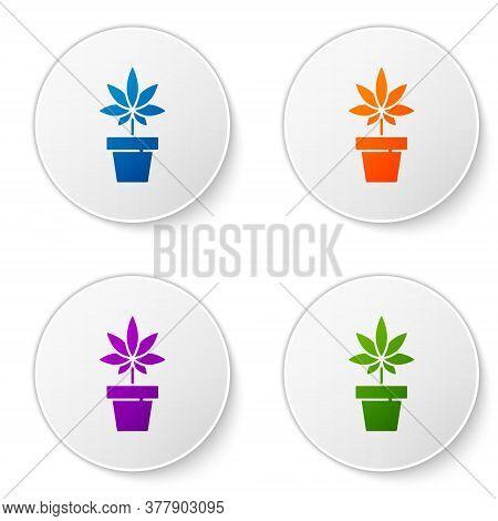 Color Medical Marijuana Or Cannabis Plant In Pot Icon Isolated On White Background. Marijuana Growin