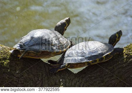 Photo Of Two Tortoises With Selective Focus And Sunlight.