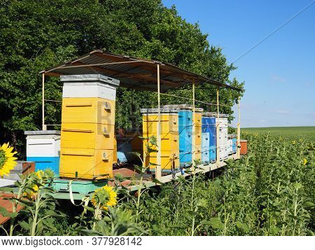 Colorful Beehives In Sunflower Field In Provance, France