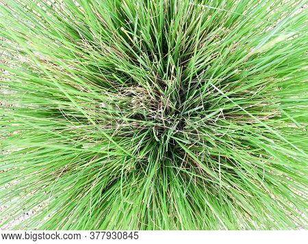 Drought Tolerant Green Plants In Garden With Stone Landscaping Like Desert Flora