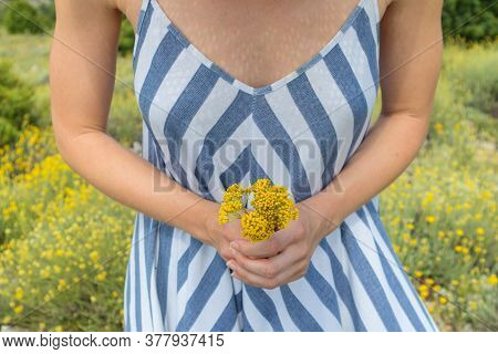 Torso Of Young Woman Wearing Striped Summer Dress In Super Bloom Of Wildflowers, Holding Bouquet Of