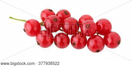 Red Currant Isolated On White Background With Clipping Path. Branch With Fresh Ripe Berries.