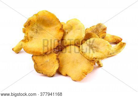 Edible Mushrooms. Chanterelle Cibarius Isolared On A White Background. Agaricus Cantharellus. Meruli