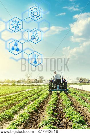 A Farmer Drives A Tractor Across Potato Plantation Field And Hexagons With Innovations. Science Of A