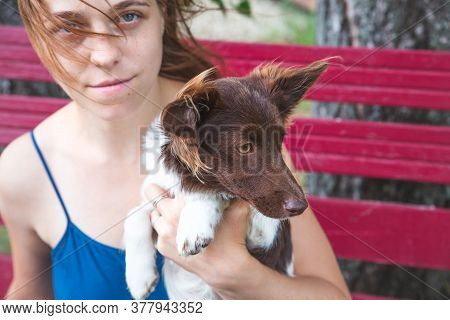 A Girl In A Blue Sundress Sits On A Bench And Holds A Beautiful Little Brown-and-white Dog In Her Ar