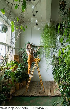 Young Woman Gardener In Orange Overalls Touching Lush Asparagus Fern Houseplant In Her Home, Standin