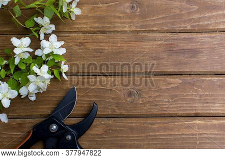 Garden Pruner And Cut Branch Of Flowers On Wooden Boards. Garden Tools And Equipment. Top View. Plac