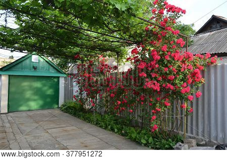 The Drive To The Garage Passes By Dense Red Rose Bushes.