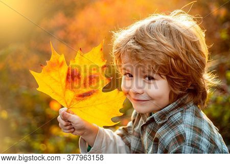 Autumn Child Dream. Child Dreaming And Holding Autumn Leaves