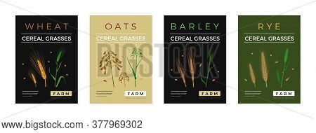 Cereal Grasses Poster Set Of Wheat Oats Barley Rye Spikelet Images Isolated Vector Illustration