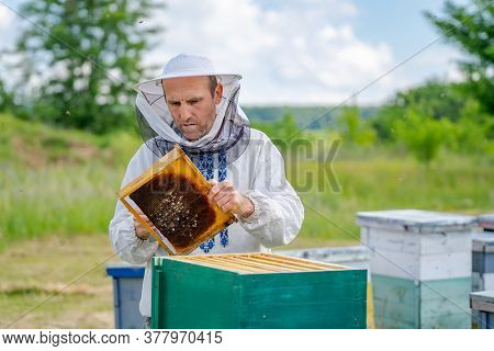 Man Working In Apiary. Protective Clothes. Apiculture. Beekeeping Concept.