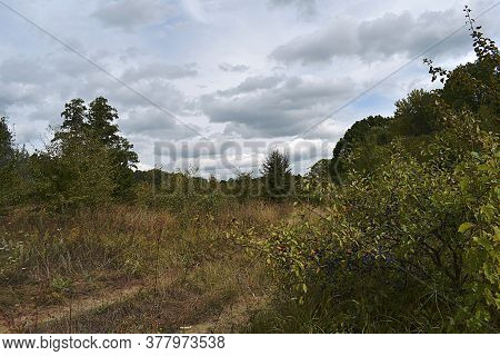 Landscape With A Forest Road And A Sloe Bush In The Foreground. Cloudy Day.