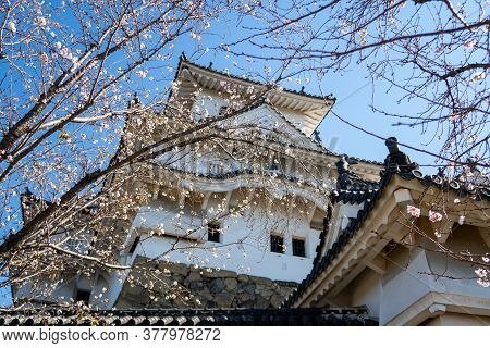 Himeji, Japan, 06/11/19. Himeji Castle In Japan Seen Throught White Autumn Trees And Branches.