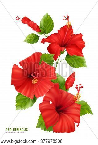 Realistic Hibiscus Composition With Editable Text And Isolated Image Of Flowers Blossom With Leaves