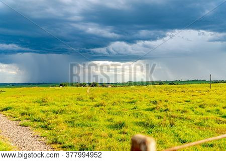 Pampa Region In Southern Brazil. Area Of Pasture Fields And Beef Cattle. Rural Region Where Livestoc