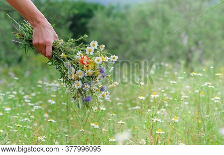 Hand Of A Young Caucasian White Woman Holds A Wild Flower Bouquet. Summer Or Spring Day. Beautiful F