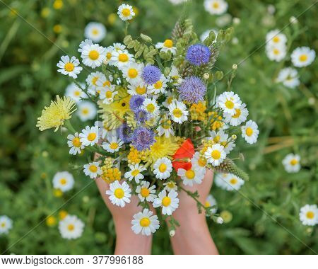 Close Up Of Wild Flower Bouquet In The Hands Of A Young Caucasian White Woman. Summer Or Spring Day.