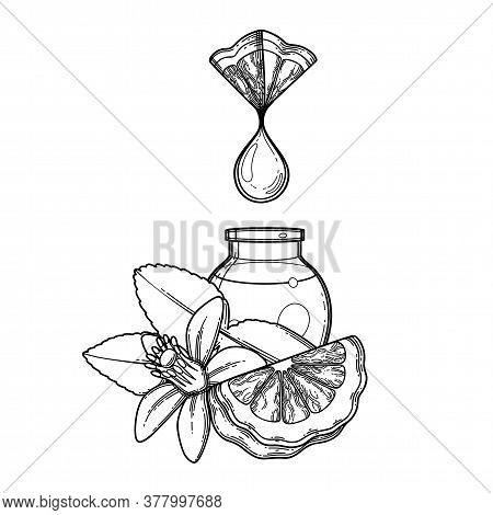 Graphic Oil Drop Dripping From The Triangular Bergamot Slice Into The Small Glass Bottle