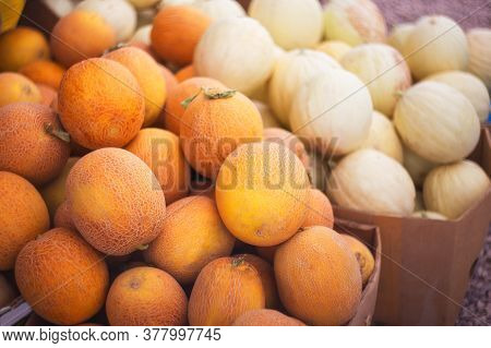 Melons Are Sold At The Farmers ' Market. Fresh Yellow And White Melons Close-up. Selective And Soft
