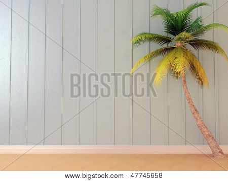 Beautiful Palm Tree In The Interior