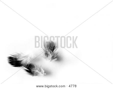 Fluffy Feathers Series
