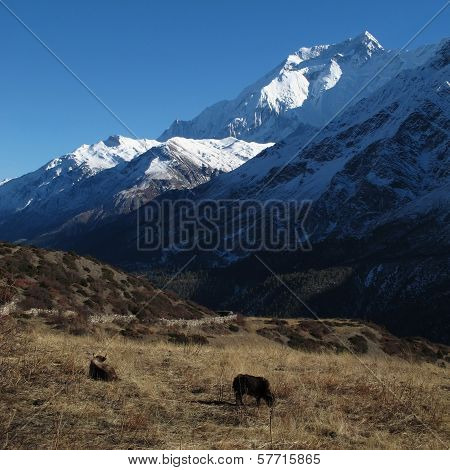 Idyllic scenery in the Annapurna Conservation Area, Nepal. poster