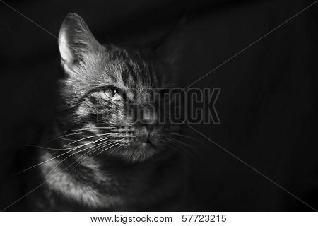 Cat in Shadow
