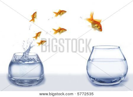 Jump Gold Fish From Aquarium To Aquarium