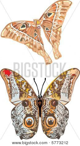 Two Tropical Butterflies Illustration