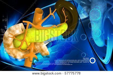 Pancreas and Spleen