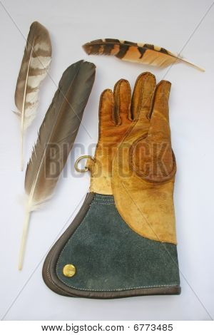 Falconry glove and feathers.