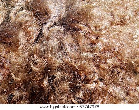 Detail Hair