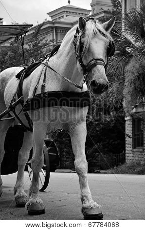 A carriage horse in historic downtown Savannah, Georgia poster