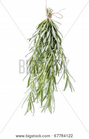 Rosemary Bouchet Hanged For Drying