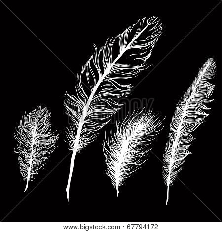 Set of multicolored feathers. On white background