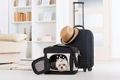 Small dog maltese sitting in his transporter or bag and waiting for a trip poster