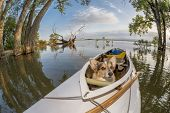 Corgi dog in a decked expedition canoe on a lake in Colorado, a distorted wide angle fisheye lens perspective, Lone Tree reservoir near Loveland, Colorado poster