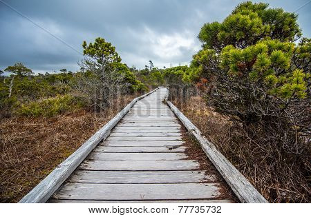 Long Boardwalk Through Marsh