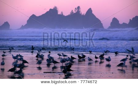 Early Morning, Olympic National Park